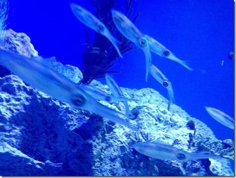 エギング以外で、イカを釣る方法を教えて!